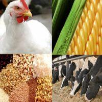 تولیدکنندگان خوراک دام و طیور