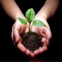 نهاده های کشاورزی ( بذر ، سم ، کود )
